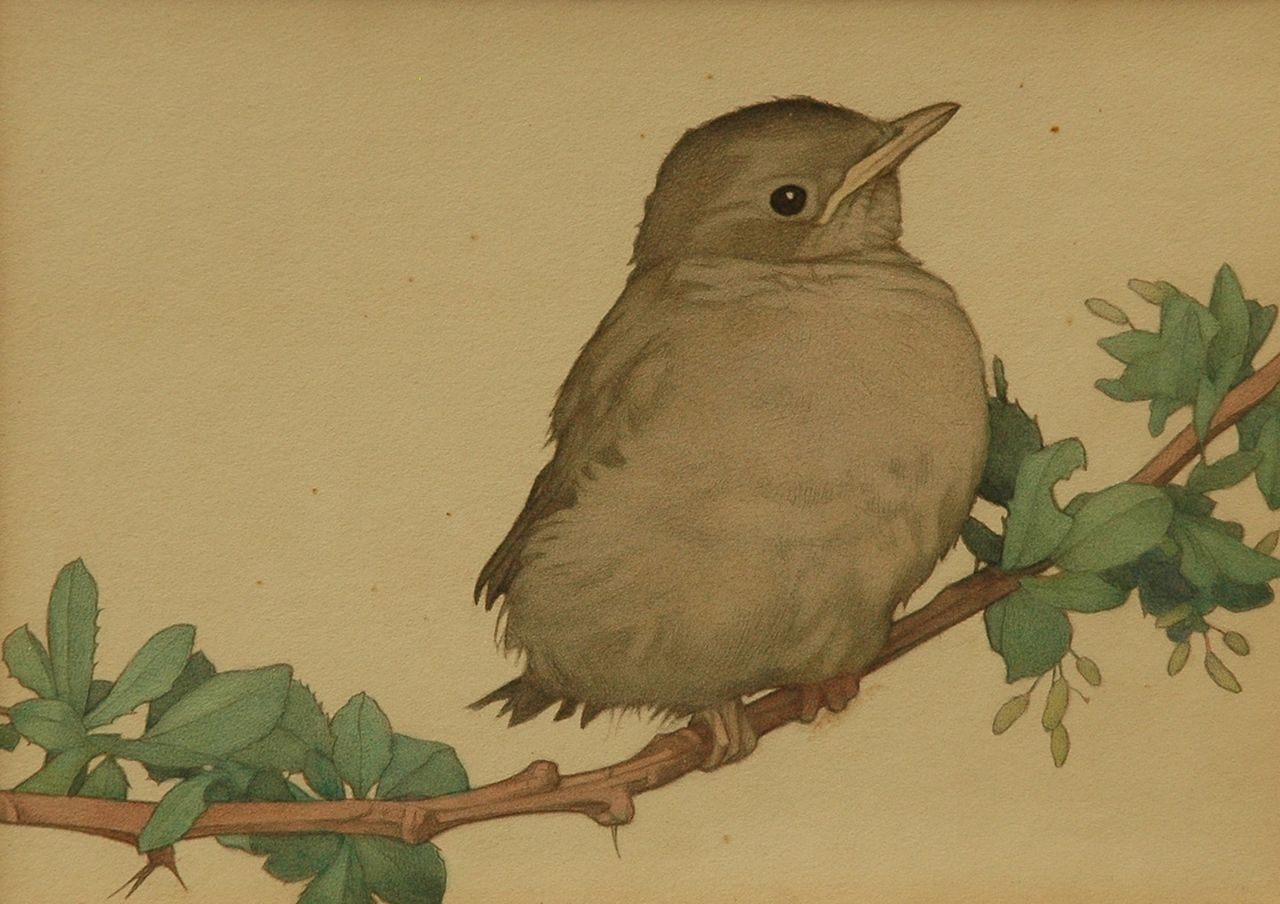 Charles Emile Heil | A young catbird on a branch, pencil and watercolour on paper, 20.2 x 24.3 cm, signed u.l.