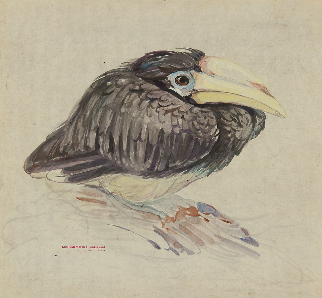 Bruigom M.C.  | Margaretha Cornelia 'Greta' Bruigom | Watercolours and drawings offered for sale | A young hornbill, watercolour on paper 32.4 x 35.5 cm, signed l.l. with the artist's stamp