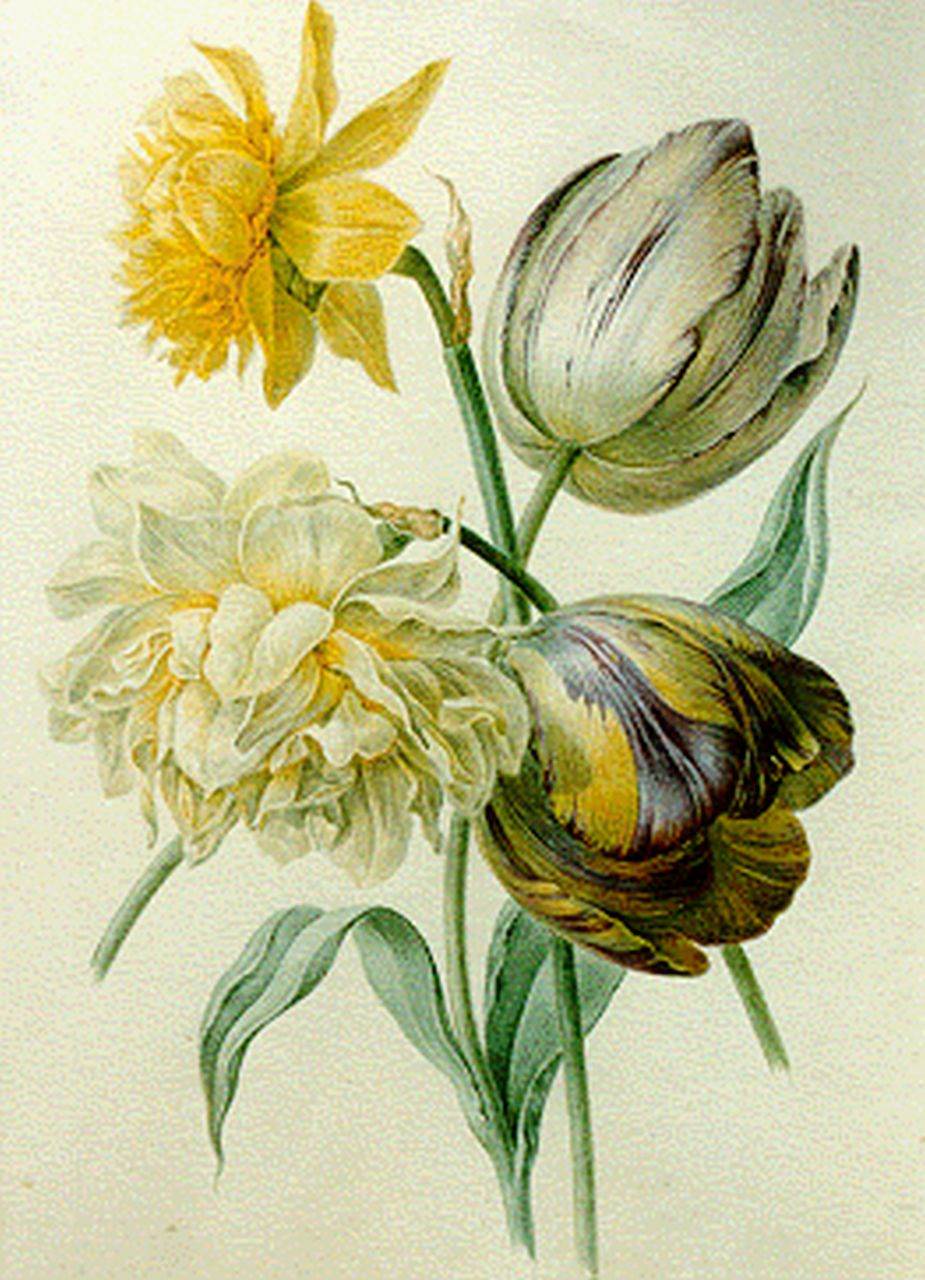 Maria Geertruida de Goeje-Barbiers | A still life with tulips and a daffodil, watercolour on paper, 26.6 x 19.4 cm, signed on passe-partout and dated 1844