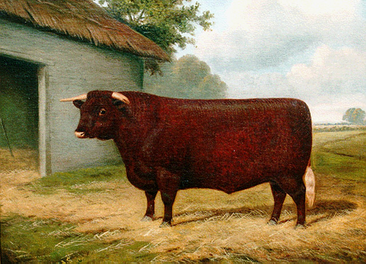 William Albert Clark | British breeding bull, oil on canvas, 43.2 x 53.2 cm, signed l.l. and dated 1911