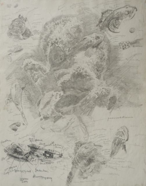 Gerrit Willem Dijsselhof | Study of red gurnards in an aquarium, black chalk on paper, 53.0 x 42.3 cm