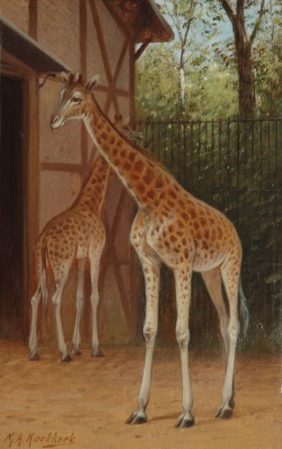 Marinus Adrianus Koekkoek II | Giraffes in the Amsterdam zoo, oil on paper laid down on board, 25.4 x 16.3 cm, signed l.l.