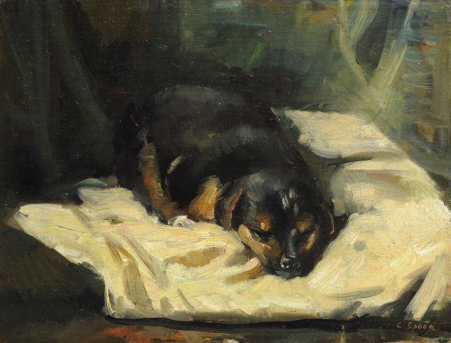 Cornelis Spoor | A sleeping dog, oil on canvas laid down on board, 28.0 x 36.5 cm, signed l.r.
