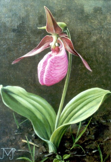 Voerman jr. J.  | Orchid, oil on canvas laid down on painter's board 17.9 x 12.8 cm, signed l.l. with monogram