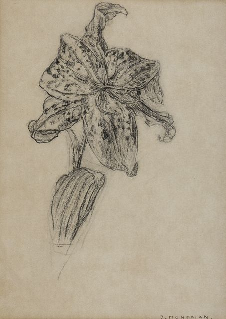 Mondriaan P.C.  | Lily, charcoal on paper 25.9 x 19.0 cm, signed l.r. 'P. Mondrian' and executed 1912 or after 1921