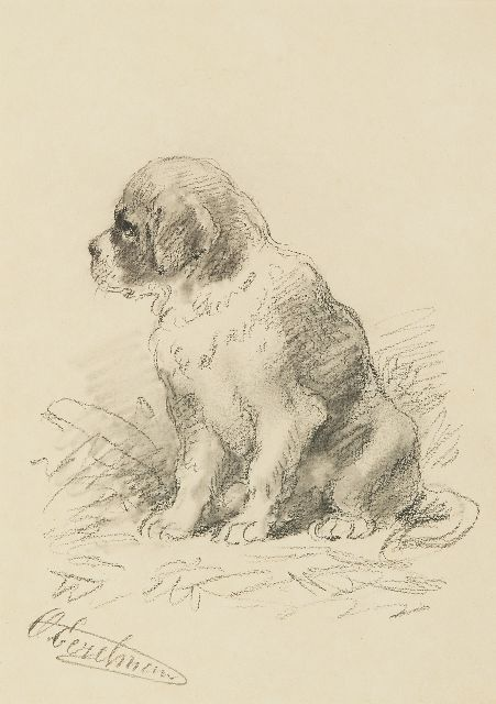 Otto Eerelman | Saint Bernard pup, black chalk and watercolour on paper, 24.8 x 17.7 cm, signed l.l.