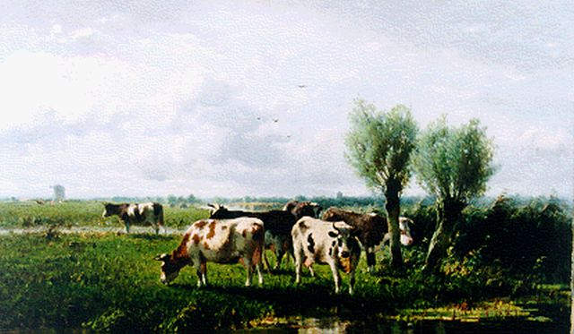 Cornelis Westerbeek | A polder landscape with cows grazing, oil on canvas, 56.8 x 96.8 cm, signed l.l. and dated '96