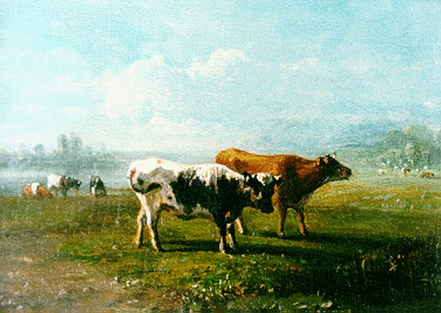 Jan Bedijs Tom | Cows in a meadow, oil on panel, 13.3 x 18.4 cm, signed l.l.