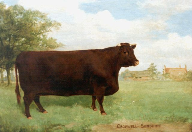 Charles Edwin M. Baldock | Cropwell Sunshine, portrait of a cow, oil on canvas, 30.5 x 43.3 cm, signed l.l. and dated 1901