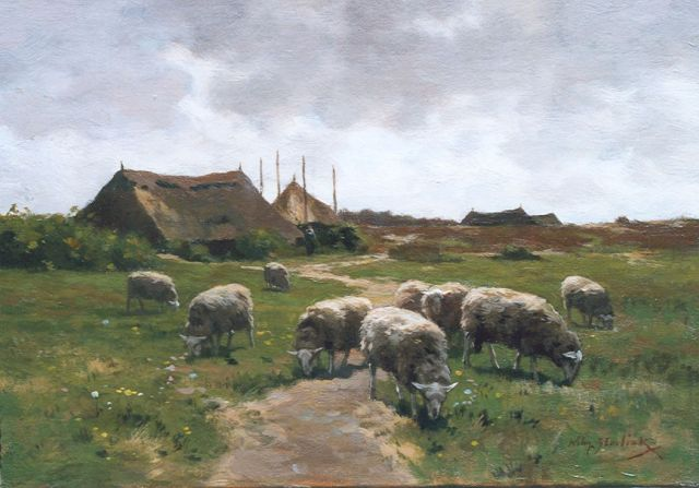 Willem Steelink jr. | Sheep grazing near the heath, oil on canvas, 26.6 x 38.0 cm, signed l.r.