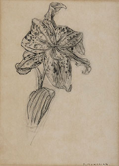 Mondriaan P.C. - Lily, charcoal on paper 25.9 x 19 cm, signed l.r. 'P. Mondrian' and executed ca. 1905-1906
