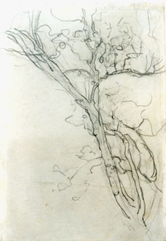 Mondriaan P.C. - A branch, a study, pencil on paper 16.8 x 11.7 cm, painted circa 1905